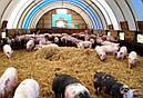 """Бактерии для подстилки """"Биохлев"""" 100гр (биопрепарат для фермерства), фото 2"""