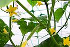 Сетка PLANT NET 8 г/м.кв, 15x17см, 2x20м, AS-CN08151720020, фото 3