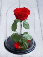 Вечная роза в колбе большая красная №A78