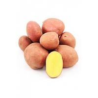 Семенной картофель Эсми 1 репродукция 2,5 кг