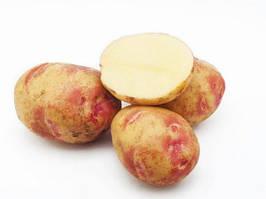 Семенной картофель Пикассо 1 репродукция 2,5 кг
