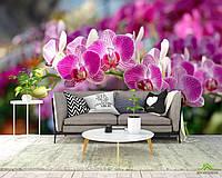 Фотообои Розовые орхидеи цветут