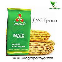 Семена кукурузы ДМС Гроно (ФАО - 260) 2019 г.у. (МАИС Синельниково)
