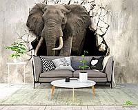 3д фотообои Слон