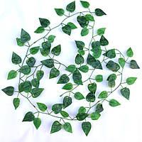 """Лиана """"Филодендрон лазящий"""" зелен  (латекс) 2 метра"""