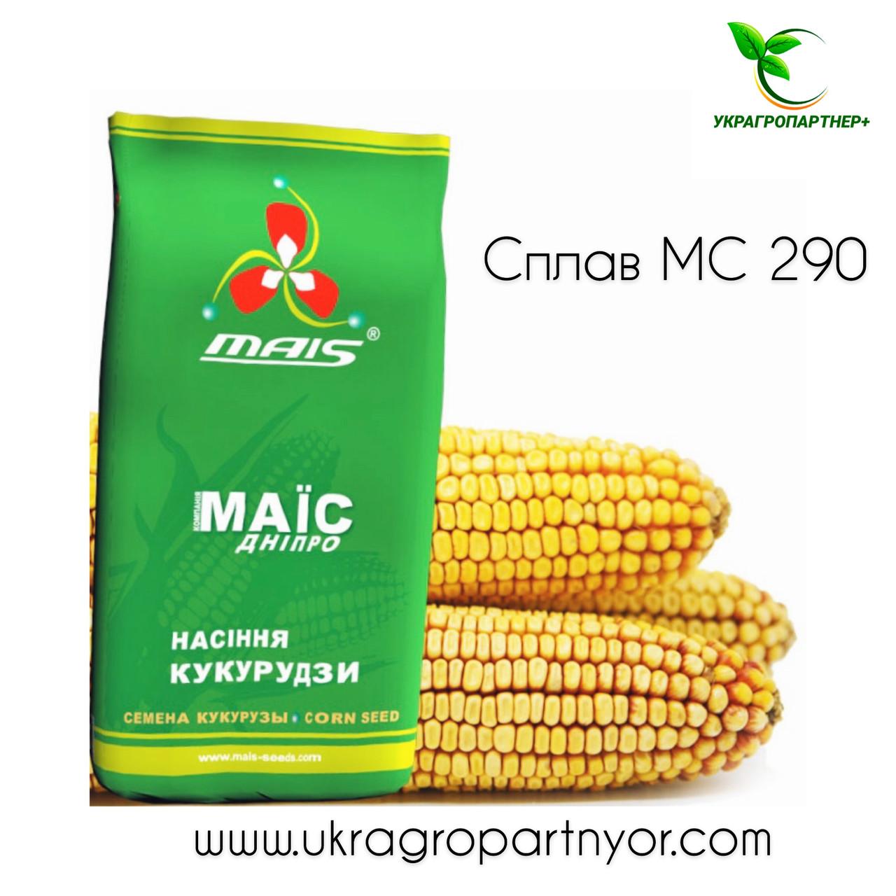 КУКУРУДЗА СПЛАВ МС 290 (ФАО - 290) фр.2 2020 р. в. (МАЇС Синельникове)