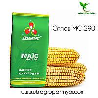Семена кукурузы Сплав МС 290 (ФАО - 290) 2019 г.у. (МАИС Синельниково)