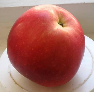 Саженцы яблони на полукарликовых подвоях М 26 и Р 14 - Весна 2021