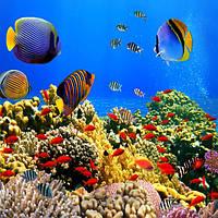 Фотообои 3D природа, море 254х184 см Коралловый риф (W1314P4)