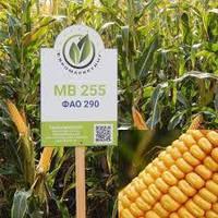 Семена кукурузы МВ 255 (ФАО  290)