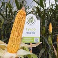 Семена кукурузы Гунор (ФАО 350)