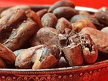 Какао боби промислові Гана сушені здвоєні 1 кг