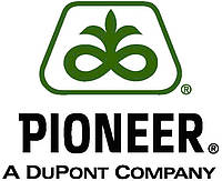 Семена Кукурузы Пионер P8000 / П8000 ФАО 230
