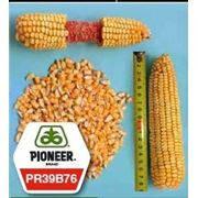 Семена Кукурузы Пионер ПР39Б76 ФАО 280