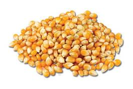 Кукуруза органическая оптом