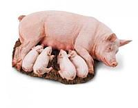 Премикс 1 % для супоросных свиноматок