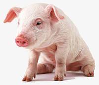 Премикс 1 % для откорма свиней