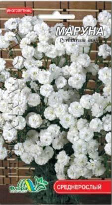 Маруна Матрикария, многолетнее растение, семена цветы 0.1 г
