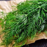 Семена Укропа LibraSeeds (Erste Zaden) ЕРЛИ ТЕТРА (КРОКОДИЛ) 0,5кг