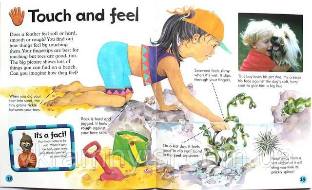 My Body | «Моє тіло». Серія: Дитячі книги англійською, Крамниця дитячих книжок