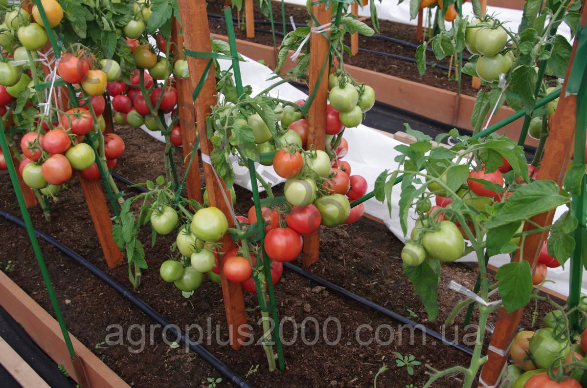 интернет магазин семян цены