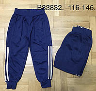 Спортивные брюки для мальчиков Egret ,116-146 рр. Артикул: B83832, фото 1