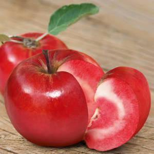 Яблоня Сирена