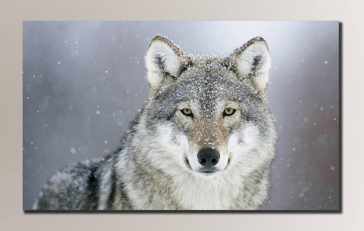 Картина HolstArt Волк 54*32,5см арт.HAS-071, фото 2