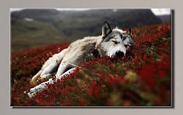 Картина HolstArt Волк на горе 90*55см арт.HAS-414