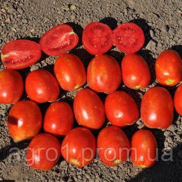 Семена Томата LibraSeeds (Erste Zaden) БОСТОН (ЕЗ 17014) F1 5000с