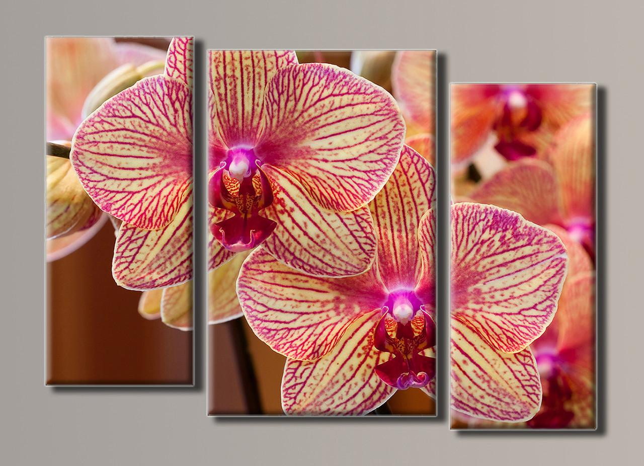 Картина модульная HolstArt Розовые орхидеи 56*82см 3 модуля арт.HAT-033