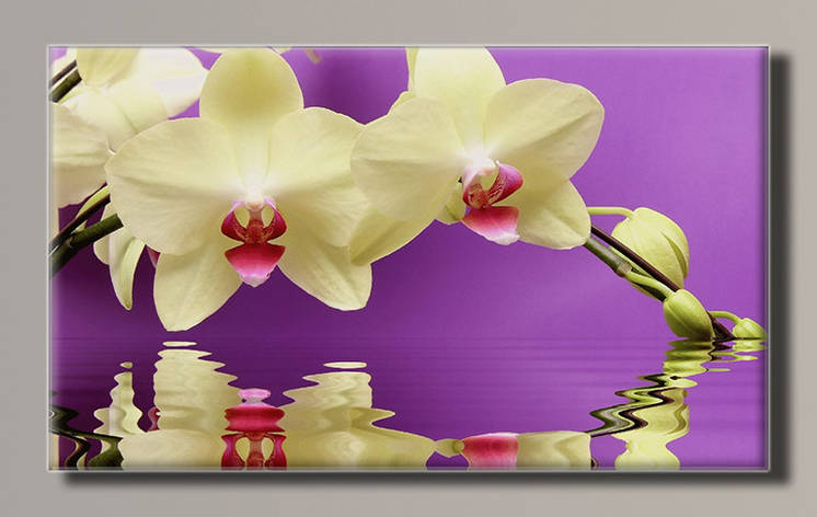 Картина (не раскраска) HolstArt Белая орхидея 91*55см арт.HAS-378, фото 2