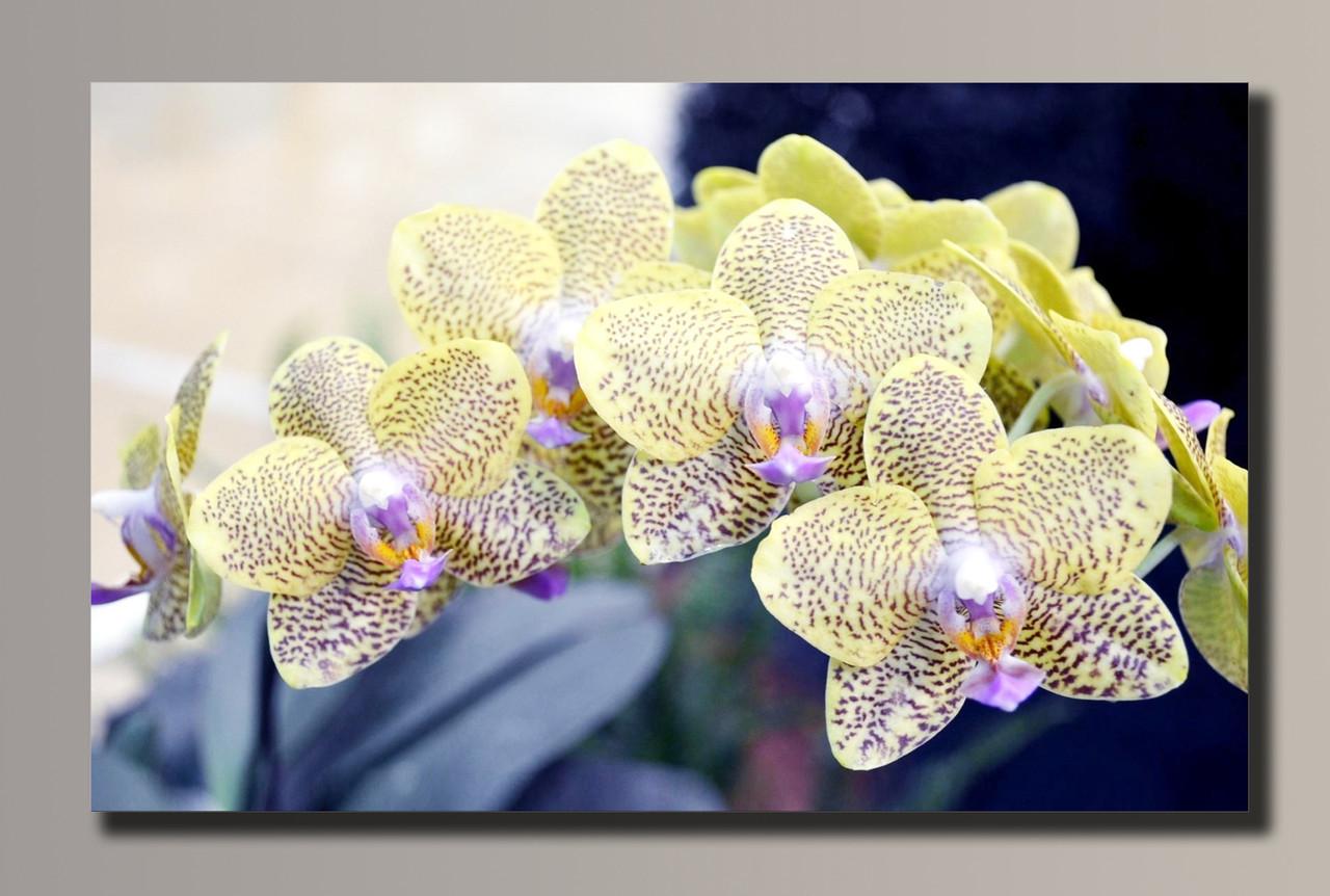 Картина HolstArt Орхидеи 54*34см арт.HAS-089