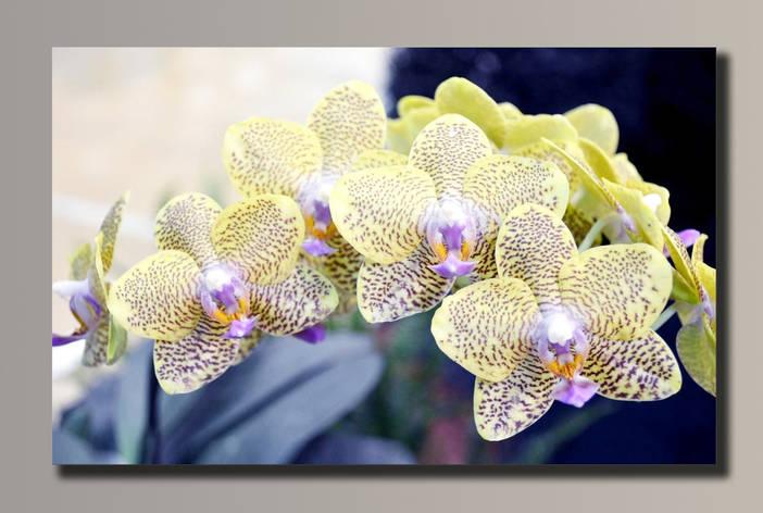 Картина HolstArt Орхидеи 54*34см арт.HAS-089, фото 2
