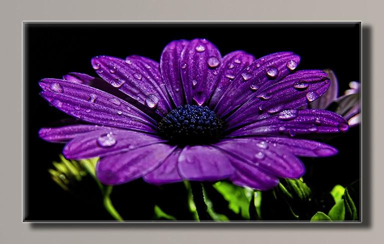 Картина HolstArt Фиолетовая гербера 55*32,5см арт.HAS-366