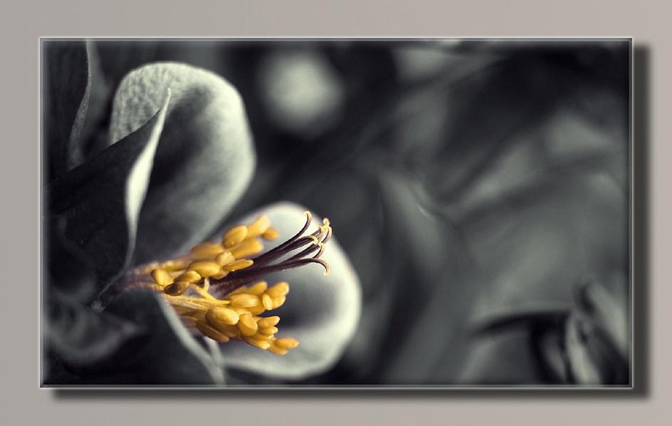 Картина HolstArt Цветок 55*32,5см арт.HAS-369