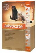 Advocate Краплі Адвокат від бліх та кліщів для кішок і кошенят до 4 кг 1 шт