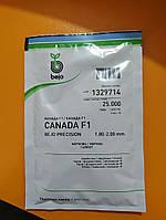 Морква Канада F1 25 000с. Bejo 1,8-2,0мм, фото 1