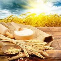 Мука Manitoba из мягких сортов пшеницы Италия - 06947