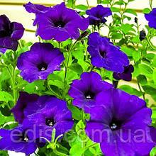 Петунія мініатюрна Фіолетова, насіння 0,1 г, ТМ Яскрава