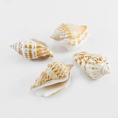 Бусины Monisto Морская Ракушка 40-65x20-25мм Цвет: Бежевый 50г