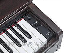 Цифровое пиано Yamaha YDP-103 палисандр, фото 2