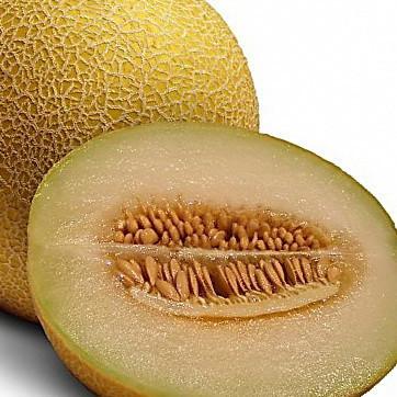 Семена дыни Ананас, 500 грамм, Hortus | профессиональные
