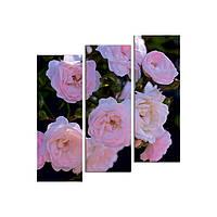 """Модульная картина на холсте """"Розы чайные"""" 790х810мм, фото 1"""