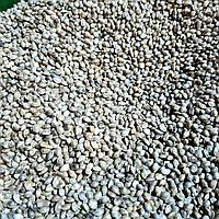 Конопля для рыбалки семена 5кг урожай 2020