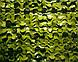 Сітка маскувальна двостороння на cітковій основі Зелена двоколірна - Camonet, PE, фото 3
