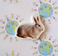Кролик. Магнит обучающий