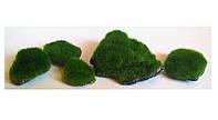 Набор камней Aquatic Plants для нано аквариумов, 5 шт