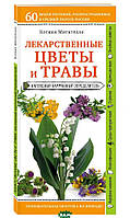 Митителло Ксения Борисовна Лекарственные цветы и травы. Наглядный карманный определитель