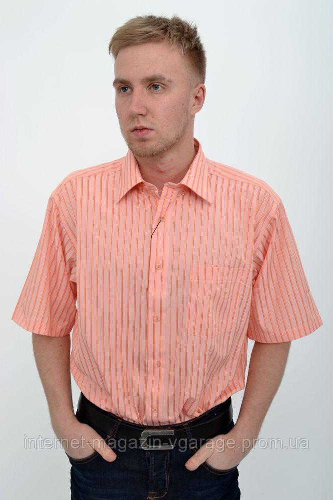 Рубашка 869-5 цвет Коралловый
